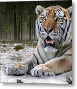 TJ  Metal Print by Big Cat Rescue