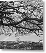 To Lie Here With You Would Be Heaven Metal Print