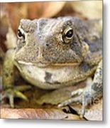 Toad Metal Print
