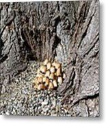 Toadstools In The Gravel Metal Print by Will Borden
