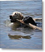 Together We Fetch Metal Print by Kathy Sampson