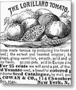 Tomato Advertisement, 1889 Metal Print