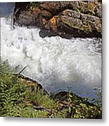 Tongass National Forest Metal Print