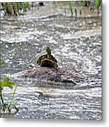 Top Of The World Turtle Metal Print