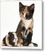 Tortoiseshell Kitten With Baby Metal Print
