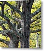 Tortured Trees Metal Print
