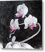 Touch Of Pink Metal Print by Diana Shively