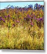Touch Of Purple In October Metal Print