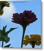 Touch Of Sky Metal Print