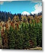 Touched By Fire Metal Print