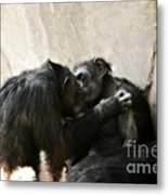 Touching Moment Gorillas Kissing Metal Print