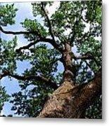 Towering Oak In Summer Metal Print