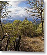 Trail At Cathedral Hills Metal Print