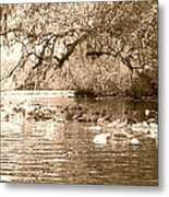 Trail Of Lillypads Metal Print