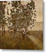 Trail To The Summer Beach Metal Print