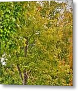 Transition Of Autumn Color Metal Print