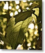 Transparent Glow II Metal Print by Rotaunja