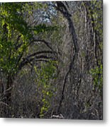 Tree Abstract  Metal Print