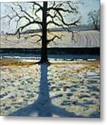 Tree And Shadow Calke Abbey Derbyshire Metal Print by Andrew Macara