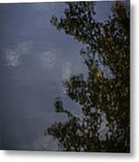 Tree And Sky Reflected Metal Print