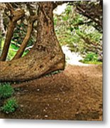 Tree And Trail Metal Print