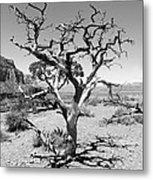 Tree At Cedar Ridge Bw Metal Print
