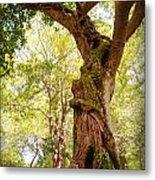 Tree At Killarny Forest Metal Print