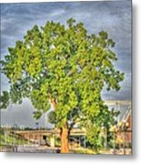 Tree At Newport On The Levee Metal Print