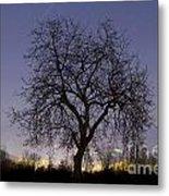 Tree At Night With Stars Trails Metal Print