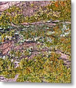Tree Bark Moss Metal Print