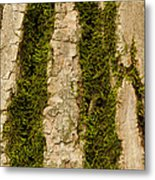 Tree Bark Mossy 4 C Metal Print
