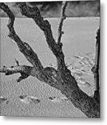 Tree Branch And Footprints On Sleeping Bear Dunes Metal Print