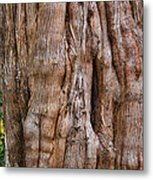 Tree Butts Metal Print