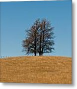 Tree Formation On A Hill Of Veldt Metal Print