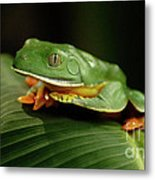 Tree Frog 1 Metal Print