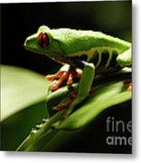 Tree Frog 13 Metal Print