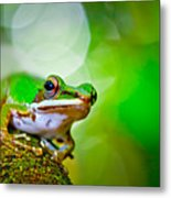 Tree Frog Metal Print by Albert Tan photo