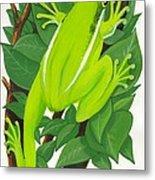 Tree Frog At Rest Metal Print