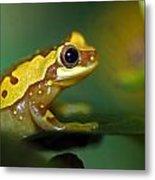 Tree Frog Dream Metal Print