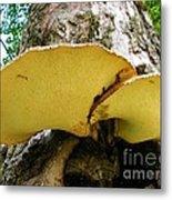 Tree Fungus 2 Metal Print