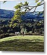 Tree In A Field, Great Sugar Loaf Metal Print