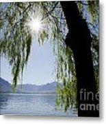 Tree In Backlight Metal Print