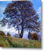 Tree In  English Park Metal Print