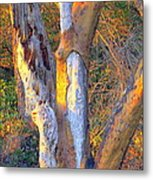 Tree In The Sunset Metal Print