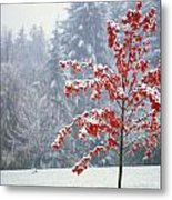 Tree In The Winter Metal Print by Natural Selection Craig Tuttle