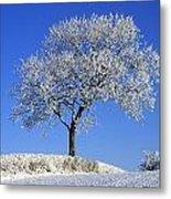 Tree In Winter, Co Down, Ireland Metal Print