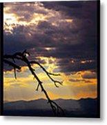 Tree Limb In Sunset Metal Print