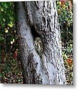 Tree Nook With Owl Metal Print