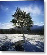 Tree On A Snow Covered Landscape Metal Print