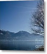Tree On Lakefront Metal Print